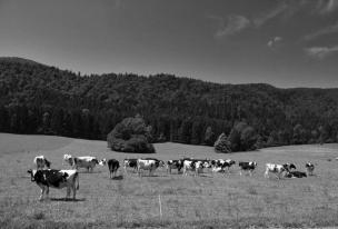 Neokrnjena narava in ekološke kmetije