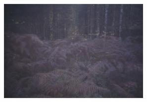 Bojan Salaj: Kočevski rog, iz serije Pokrajine (2008, camera obscura)